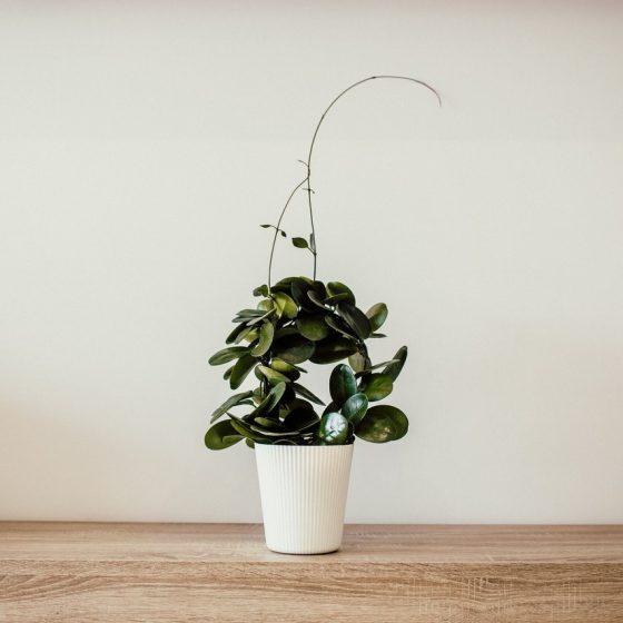 plante de birou, o idee de cadou in luna martie