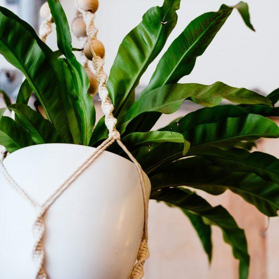 idee cadou macrame pentru prietena care are plante